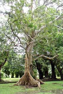Des arbres aux ges v n rables for Le jardin fromager